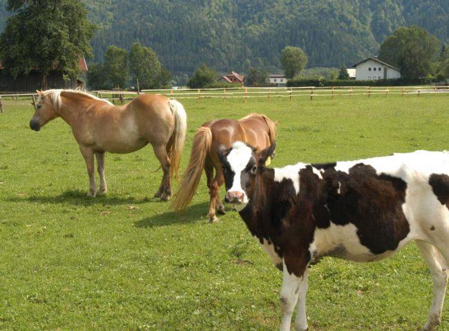 Gasthof Pension Loeffele - Bauernhof